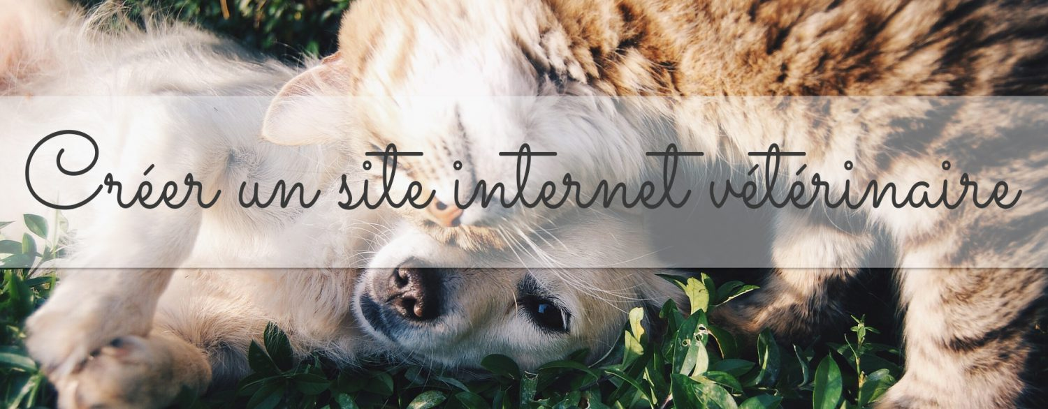 creer-un-site-internet-veterinaire